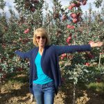 Ambrosia Apples - Apple Orchard Adventure