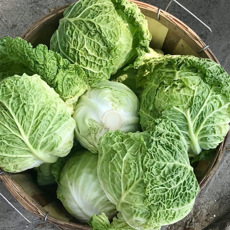 Green cabbage via lizshealthytable.com