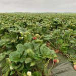 Facts, Not Fears: A Two-Day Produce Safety Tour in California